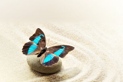 Poster Schmetterling Prepona Laerte auf dem Sand
