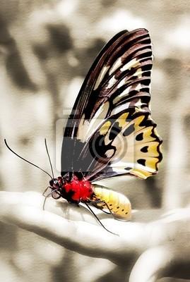 Schmetterling sitzt auf der Hand - getönten Bild