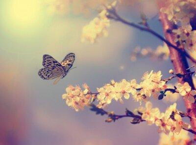 Poster Schmetterling und Kirschblüten