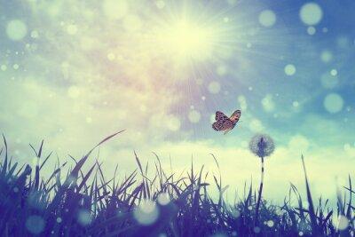 Poster Schmetterling und Löwenzahn
