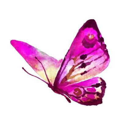 Poster Schmetterlinge Design