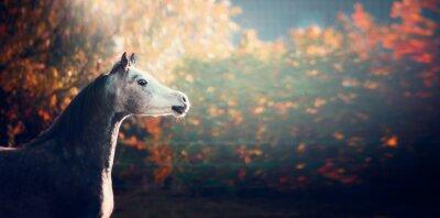 Poster Schöne arabische Pferd mit weißen Kopf auf wunderbare Natur Hintergrund