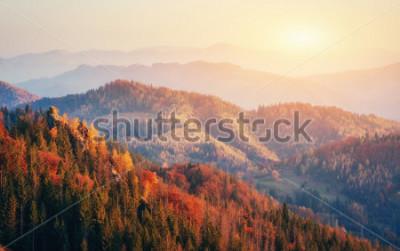 Poster Schöne Aussicht auf den Wald an einem sonnigen Tag. Herbstlandschaft Karpaten. Ukraine, Europa