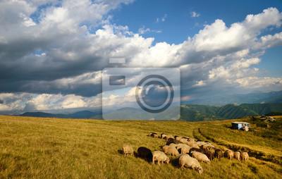 Schöne Berglandschaft mit Schaffarmen und bewölktem Himmel in