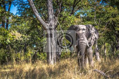 Schöne Elefanten im Khwai Conservation Area in Botsuana, Afrika