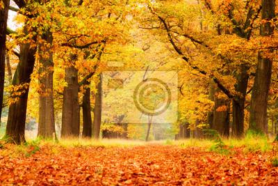 """Schöne Herbst Wald im Nationalpark """"De Hoge Veluwe"""" in den Niederlanden"""