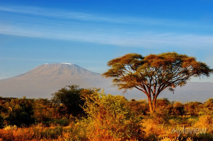 Poster Schöne Kilimanjaro Berg nach Sonnenaufgang am Morgen, Kenia, Amboseli-Nationalpark, Südafrika