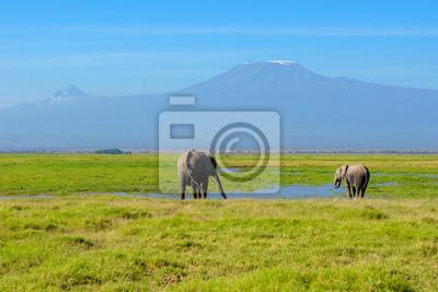 Schöne Kilimanjaro Berg und Elefanten, Kenia, Amboseli Nationalpark, Afrika