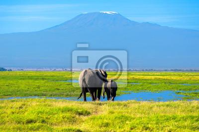 Schöne Kilimanjaro Berg und Elefanten, Kenia, Amboseli-Nationalpark, Südafrika