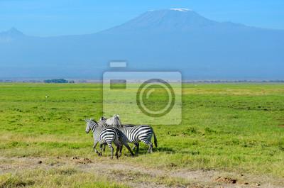 Schöne Kilimanjaro Berg und Zebras, Kenia, Amboseli Nationalpark, Afrika