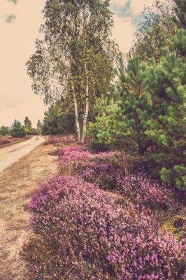 Poster Schöne Landschaft des Waldes mit blühenden Heidekraut durch die Landstraße