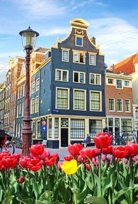 Schöne Landschaft mit Tulpen und Häuser in Amsterdam, Holland