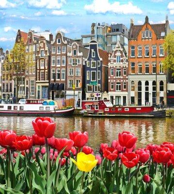 Poster Schöne Landschaft mit Tulpen und Häuser in Amsterdam, Holland