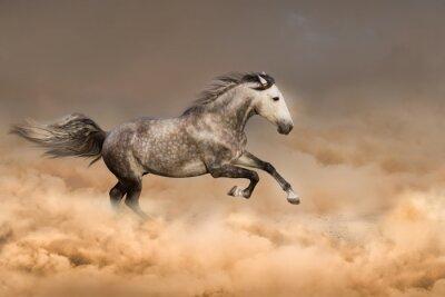 Poster Schöne Pferd laufen Galopp in Staub