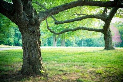 Poster Schöne Sommer Bäume und Gras im Park-Einstellung