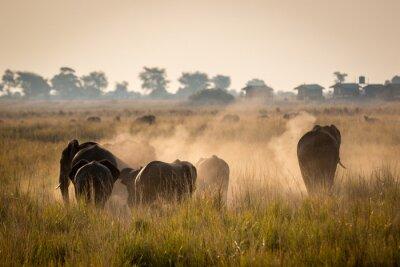 Poster Schöne Tierwelt am Chobe Nationalpark, Botswana