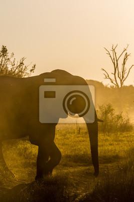 Schöne Tierwelt am Chobe Nationalpark, Botswana