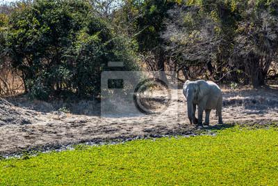 Schöne Tierwelt in South Luangwa National Park, Sambia, Afrika