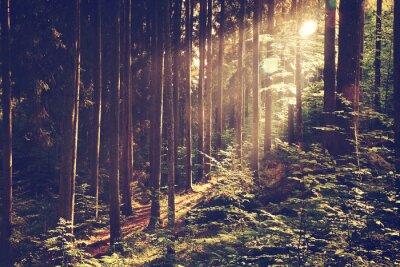 Poster Schöne verträumten Wald