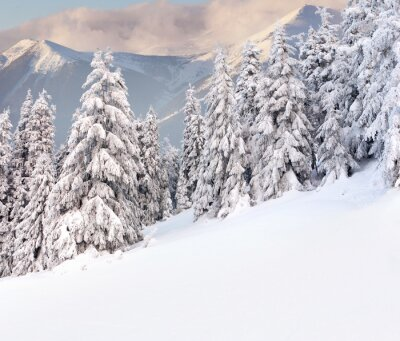 Schöne Winterlandschaft in den Bergen