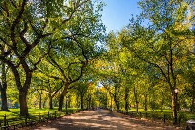 Poster Schöner Park in wunderschöner Stadt. Zentralpark. Die Mall-Bereich im Central Park im Herbst, New York City, USA