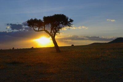 Schöner Sonnenaufgang oder Sonnenuntergang in der afrikanischen Savanne mit Akazienbaum, Masai Mara Nationalpark, Kenia, Afrika