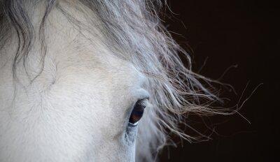 Poster Schönes Auge des weißen Pferdes