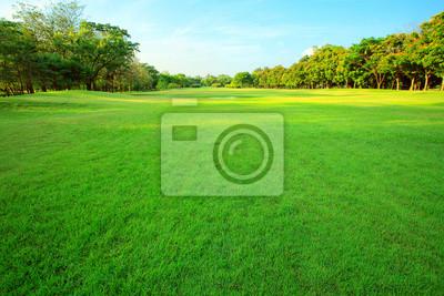 Poster schönes Morgenlicht in öffentlichen Park mit grünem Gras-Feld ein