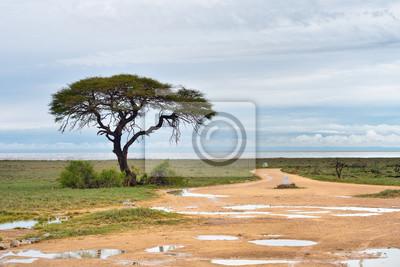 Schotterweg zur Etosha Pfanne, Namibia