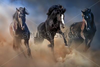 Poster Schwarze Hengste lassen Galopp im Wüstenstaub gegen den dramatischen Himmel laufen