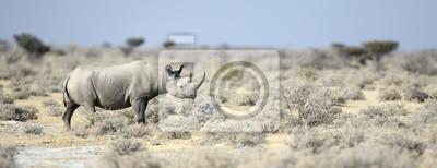 Schwarzes Nashorn geht durch die Veldt
