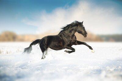 Poster Schwarzes Pferd laufen im Schnee