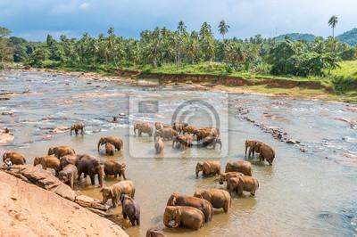 Schwimmen Elefanten