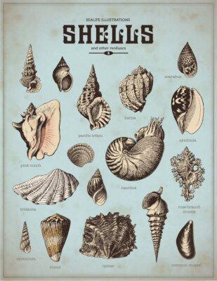 Poster Sea-Life-Grafiken: Muscheln (1)