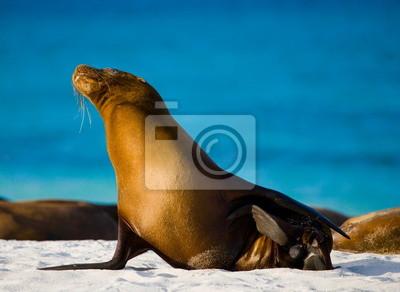 Sea lion on the beach. Galapagos Islands.