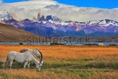 Poster See Laguna Azul in den Bergen. Am Ufer des Sees weidende Pferde. Eindrucksvolle Landschaft im Nationalpark Torres del Paine, Chile
