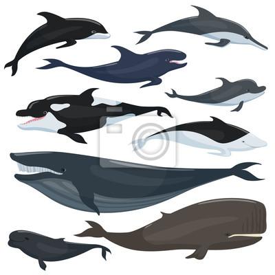 unterwasser tiere zeichnen