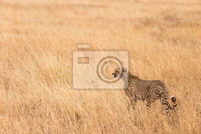 Serengeti Cheeta - Tansania Gästebewertungen