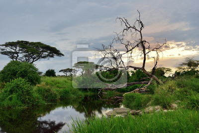 Serengeti Nationalparklandschaft, Tansania, Afrika