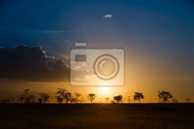 Serengeti Savanne in nebligen Sonnenuntergang Licht