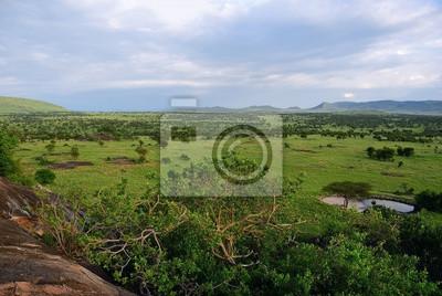 Serengeti, Tansania, Afrika