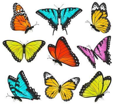 Poster Set of colorful butterflies illustration