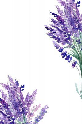 Poster set of lavender flowers elements on an isolated white background, watercolor illustration, hand drawing, greeting card with a place for text