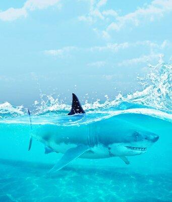 Poster Shark under water,3d illustration