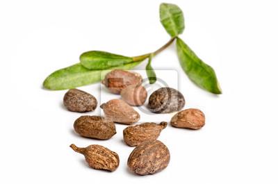 Shea-Nüsse auf weißem