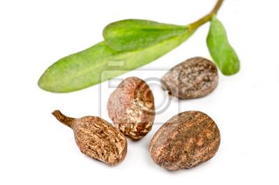 Shea Nüsse auf weißem Hintergrund