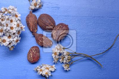 Sheabutternüsse und -blumen auf blauem Holz