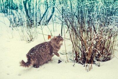 Poster Sibirische Katze zu Fuß in den verschneiten Wald