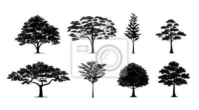 Poster Silhouette Baum gesetzt