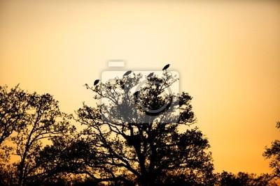 Silhouette der Reiher in einem Baum im Sonnenuntergang